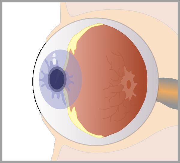 Eye clipart ear. Clip art at clker
