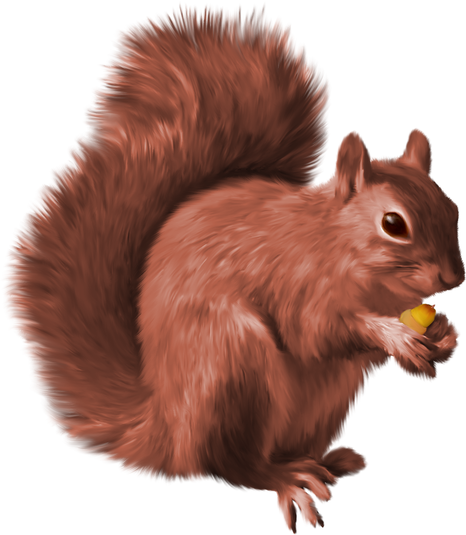 Clipart ear squirrel. Png nutcrackers pinterest and