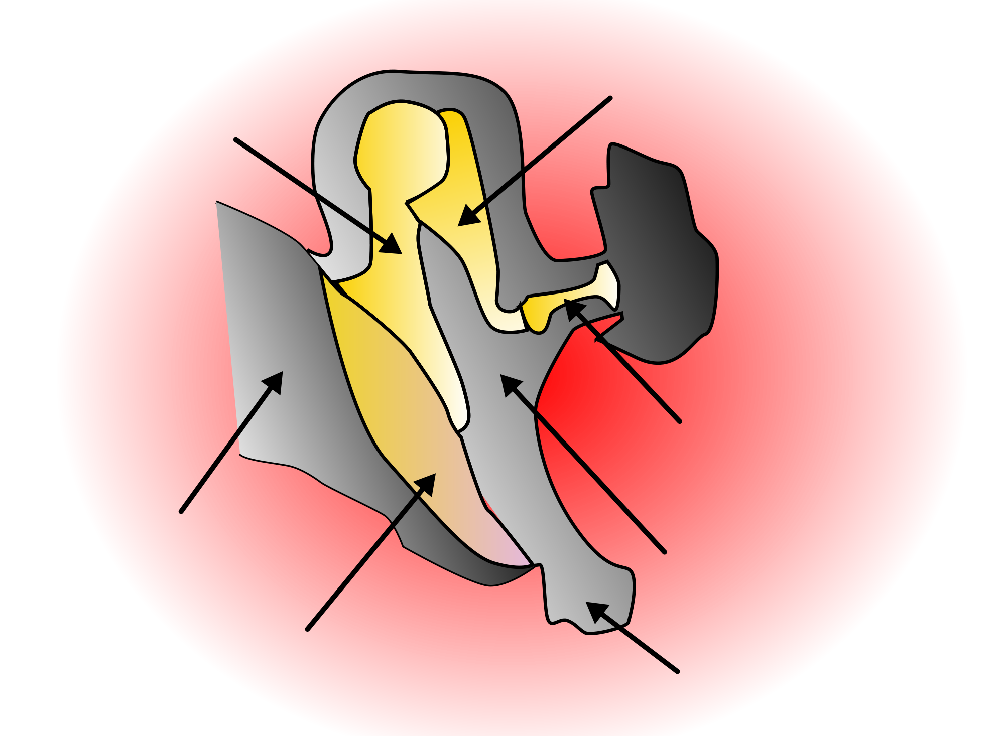 Clipart ear svg. File middle wikimedia commons