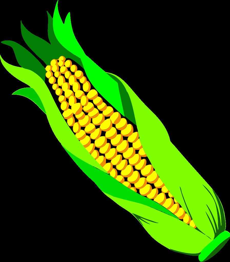 File of corn wikipedia. Clipart ear svg