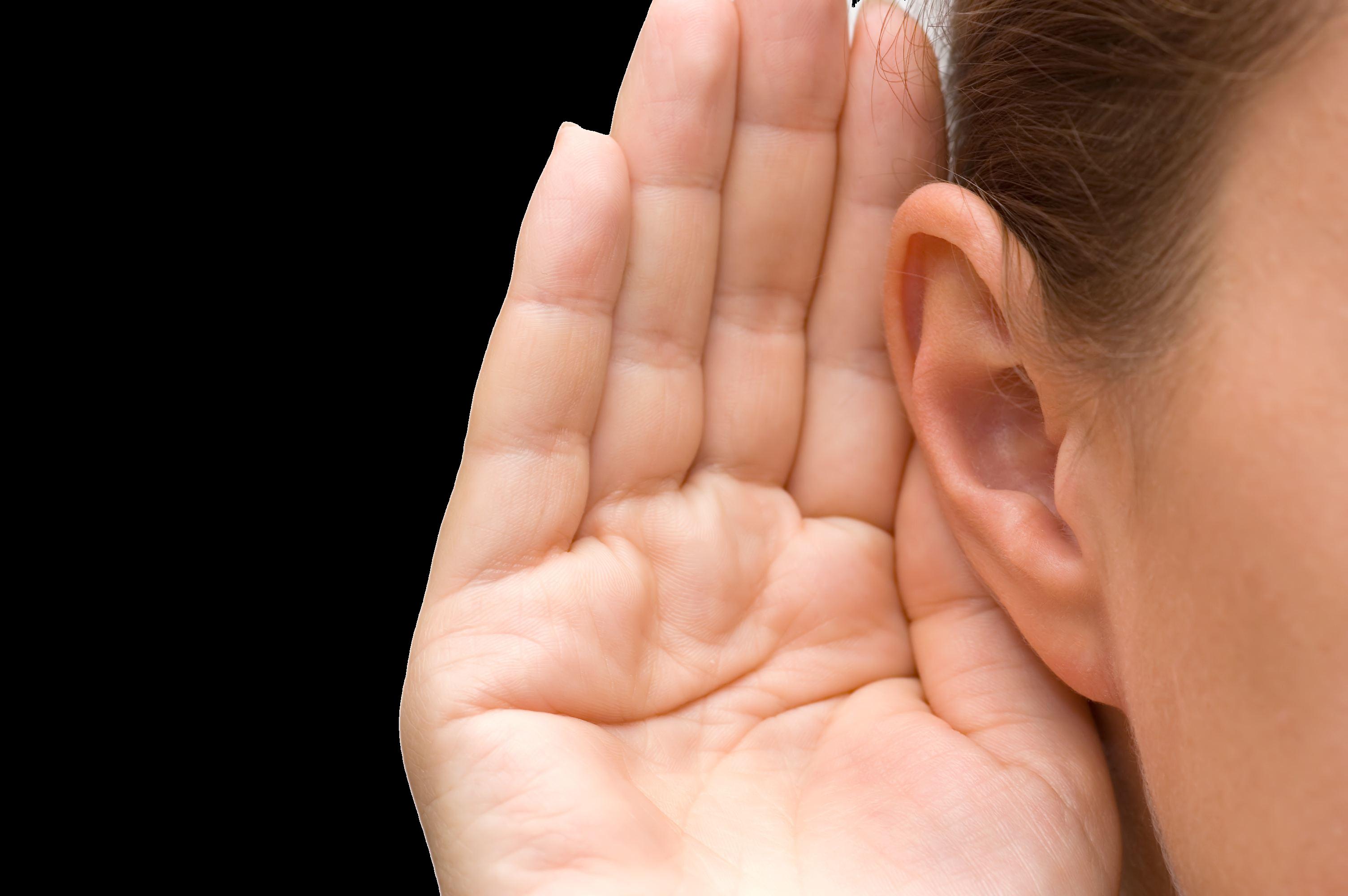 Ears clip art transparent. Clipart ear two ear