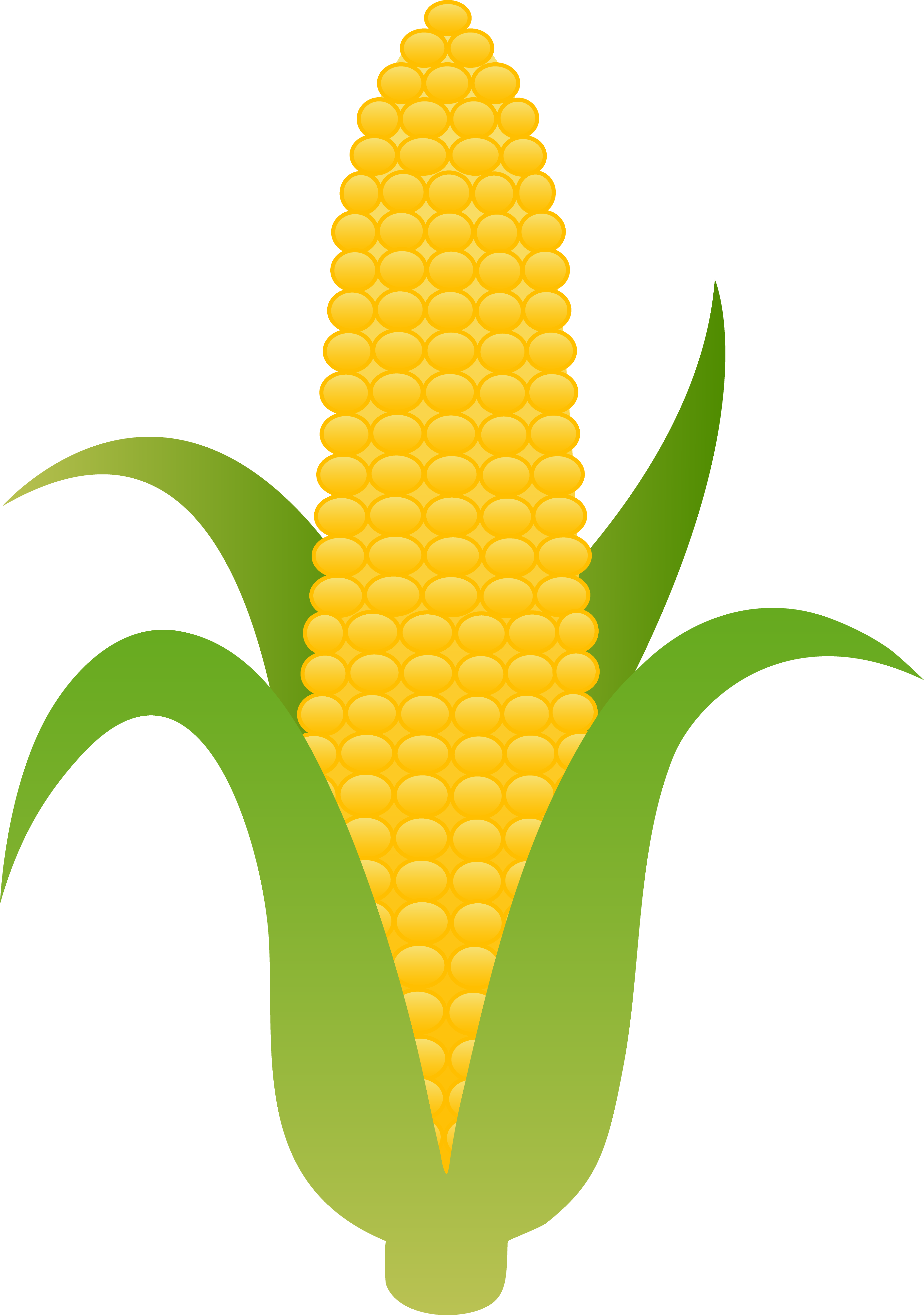 Of yellow corn clip. Free clipart ear