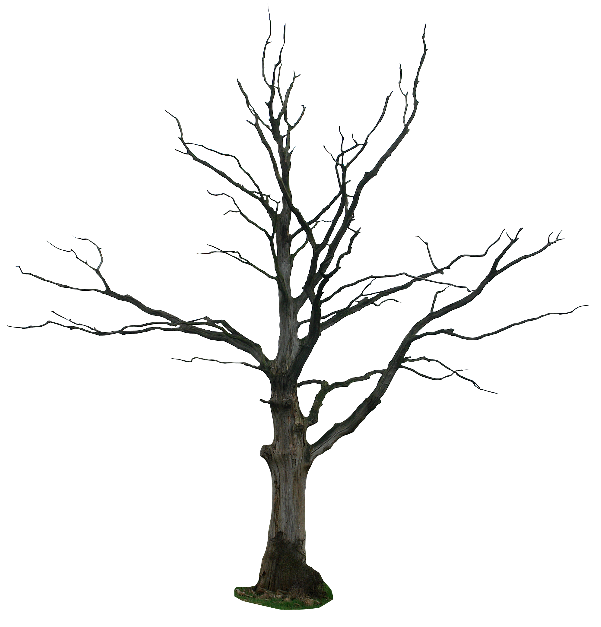 Wolf clipart kid. Dead tree cartoon trees