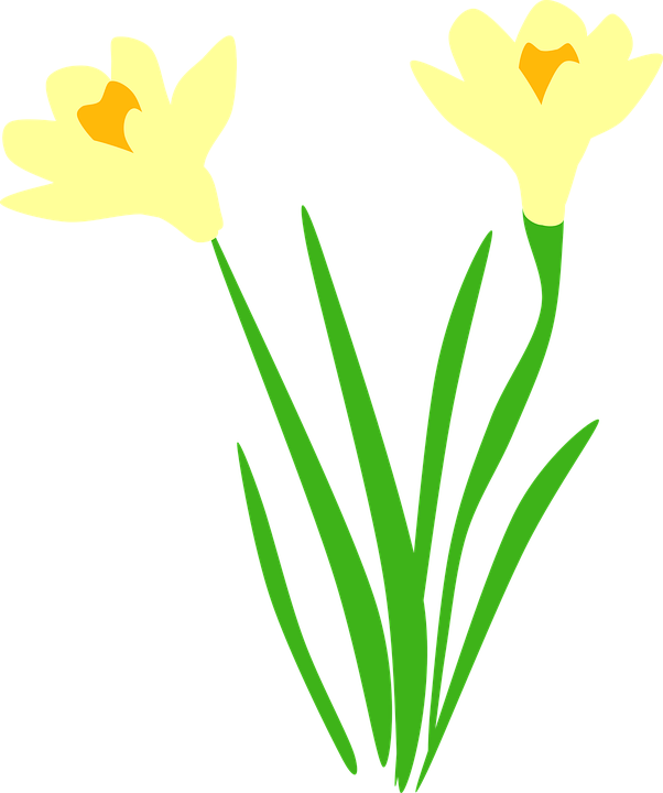 Vector made by constance. Clipart easter daffodil