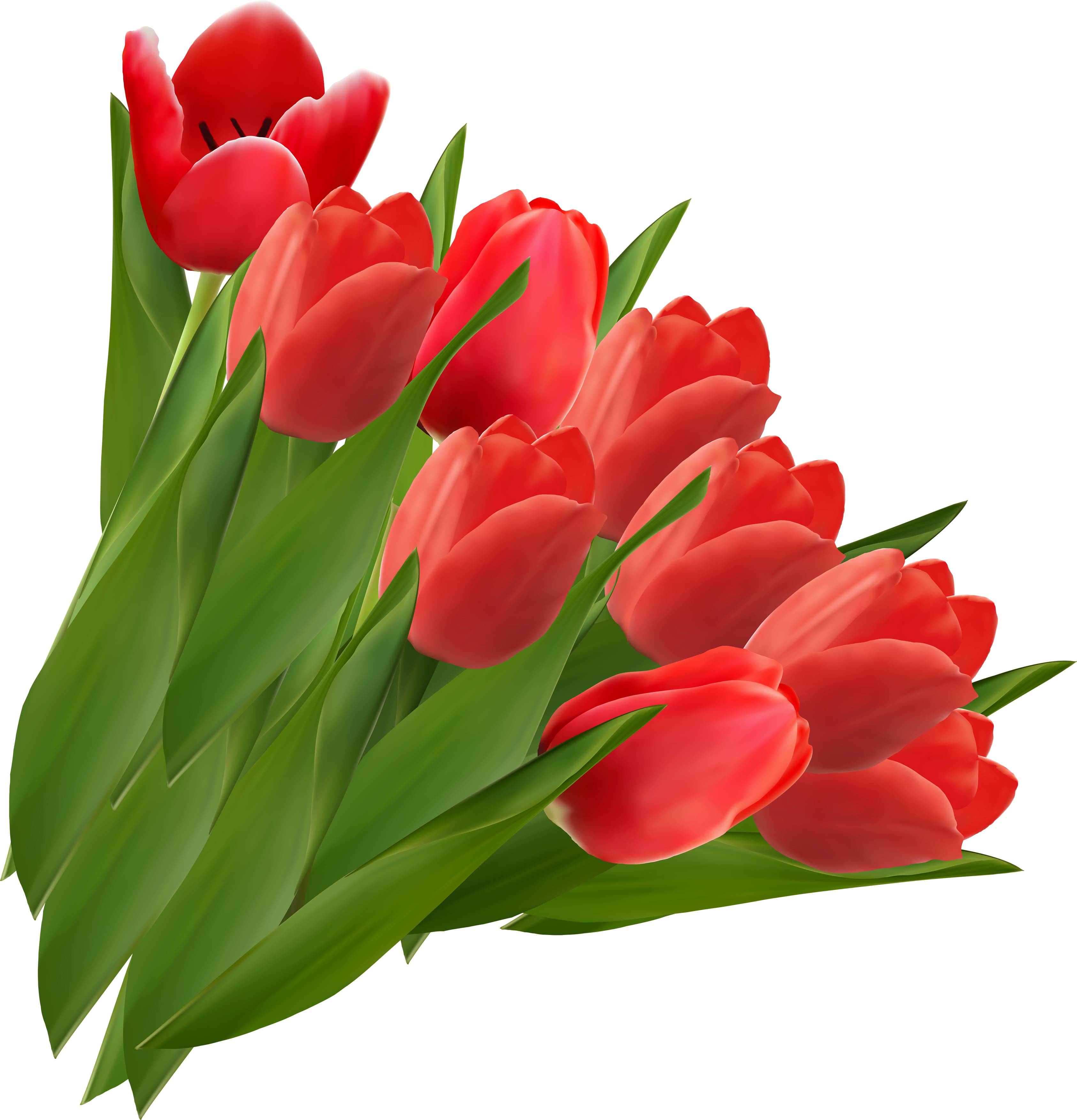 Png images free download. Clipart easter tulip