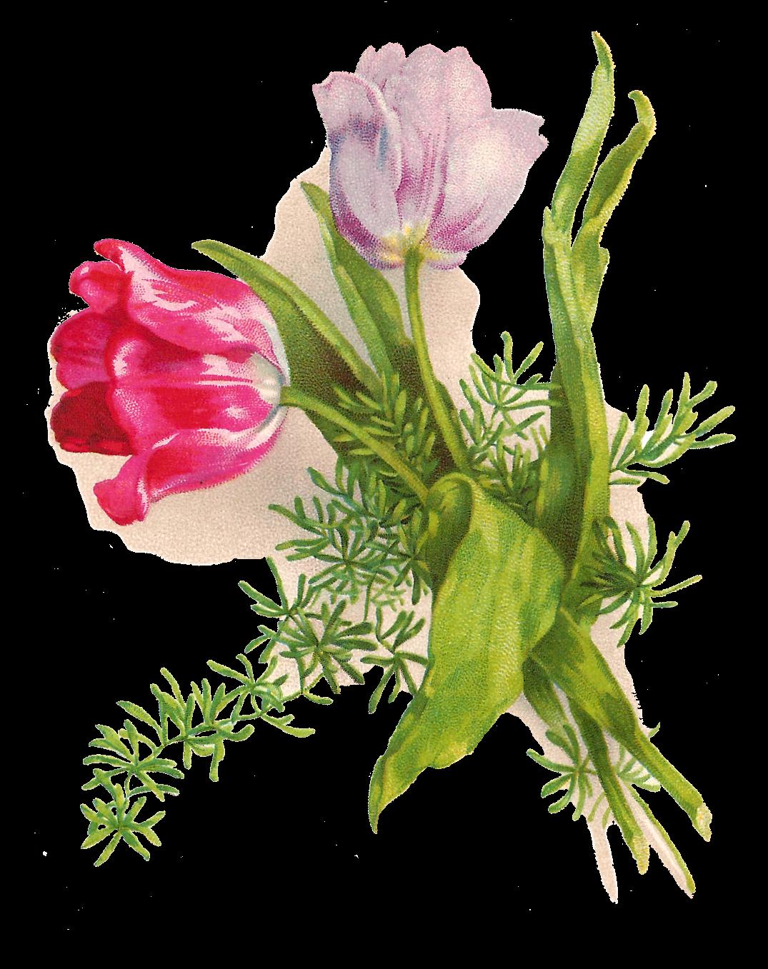 Clipart easter tulip. Antique images printable digital