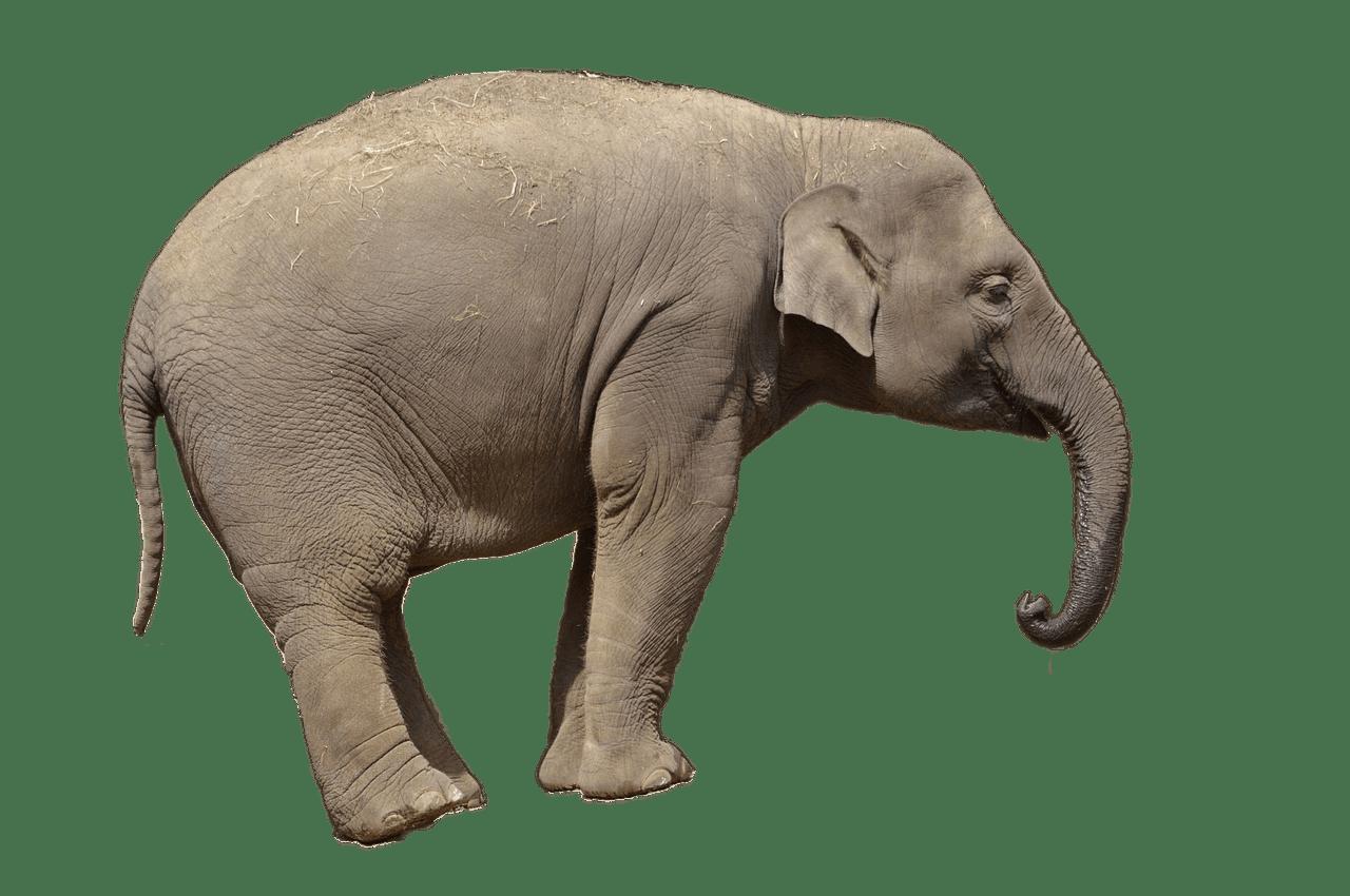 View transparent png stickpng. Clipart elephant front