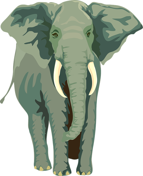 Images free image group. Clipart elephant front