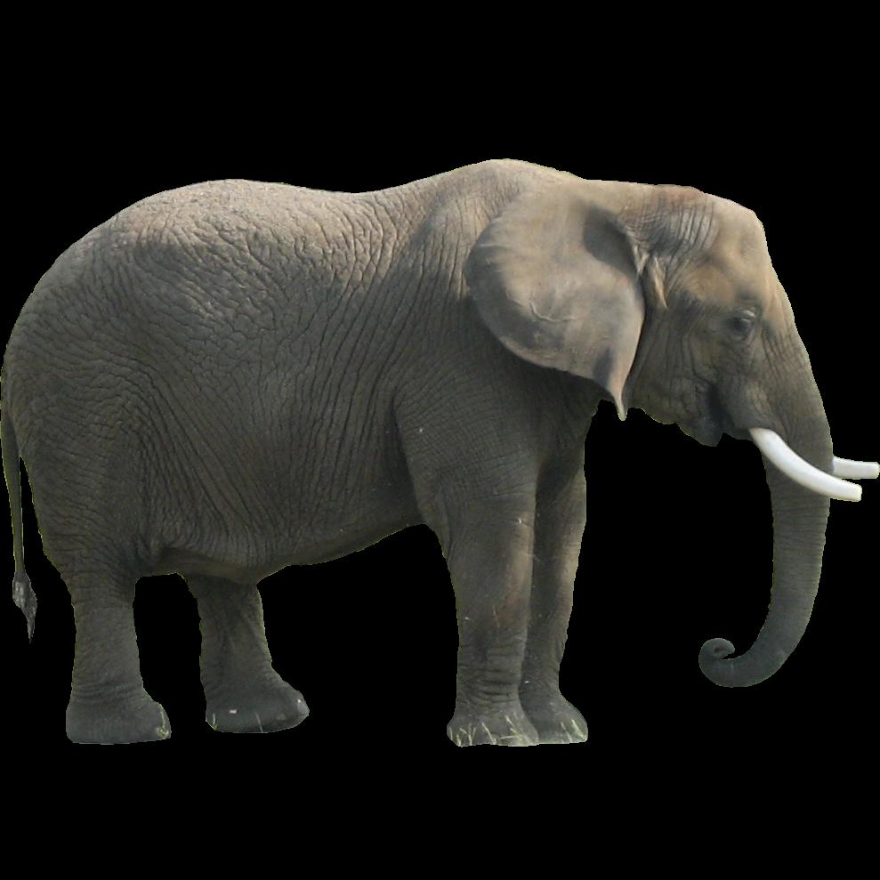 Download hq image freepngimg. Clipart png elephant