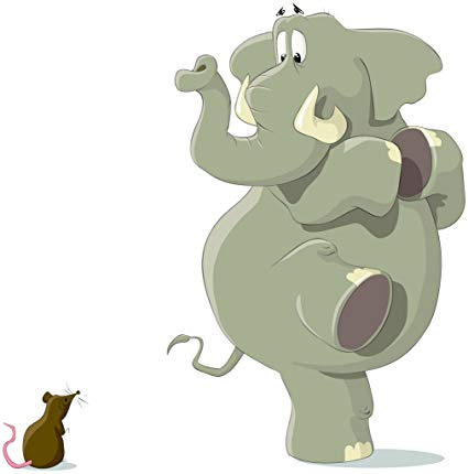 Amazon com and elephant. Elephants clipart rat
