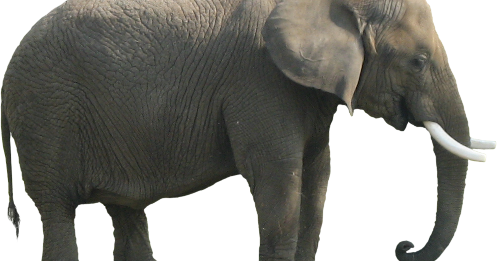 Coral clipart elephant. The in room