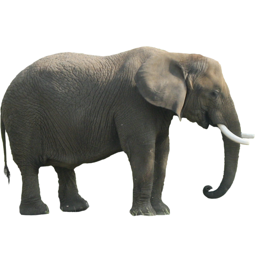 Immediate entourage animals solid. Clipart elephant tired