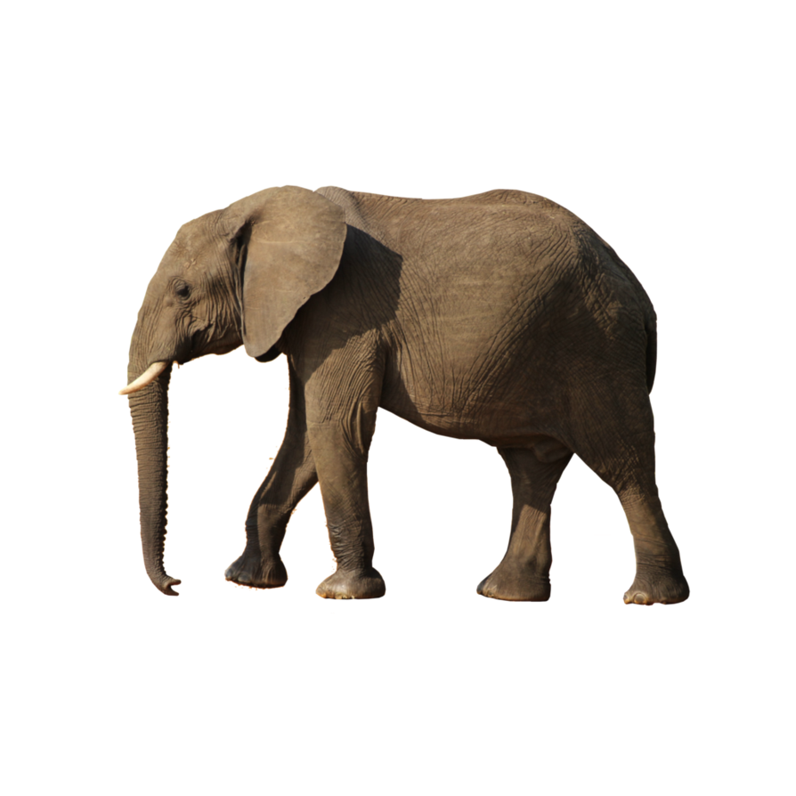 Elephants images free download. Clipart png elephant