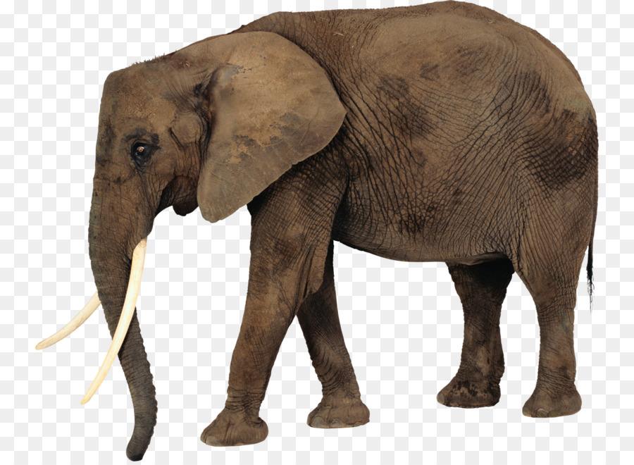 Indian wildlife . Clipart elephant wild animal