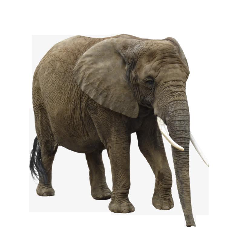 Asian african clip art. Clipart elephant wild animal
