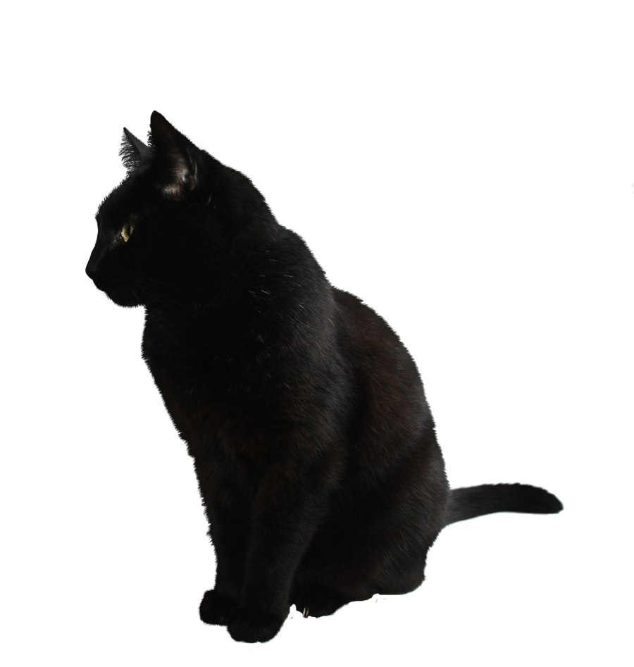 Black png by camelfobia. Clipart exercise cat