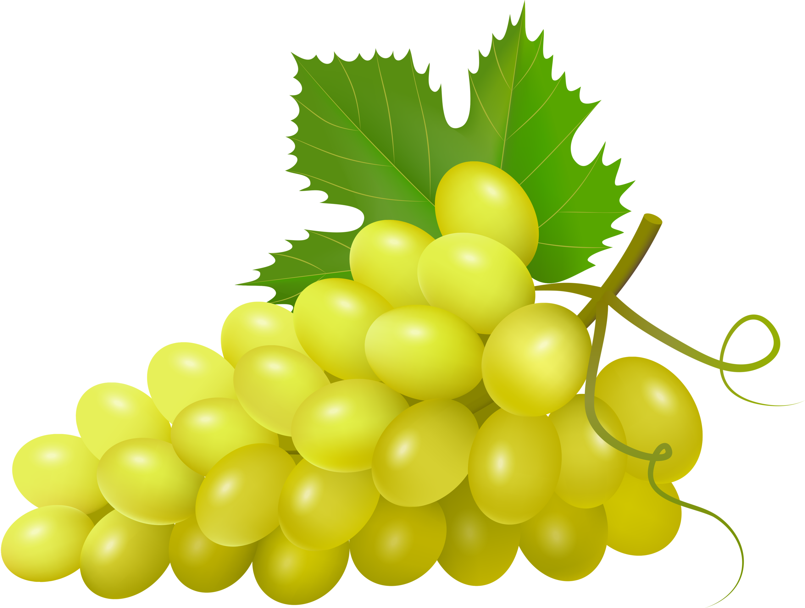 Grape clipart fruit vegetable.  png pinterest clip
