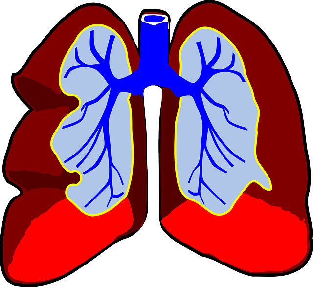 Exercise clipart heart. Facts about the cool
