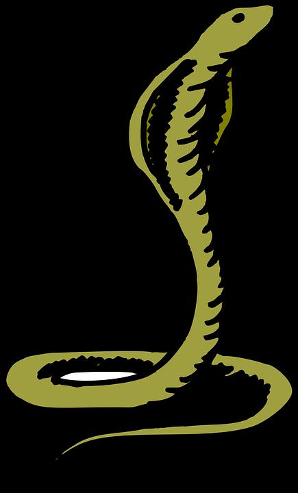 Group head transparent. Cobra clipart standing