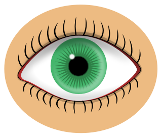 Free color cliparts download. Eyeball clipart colorful eye