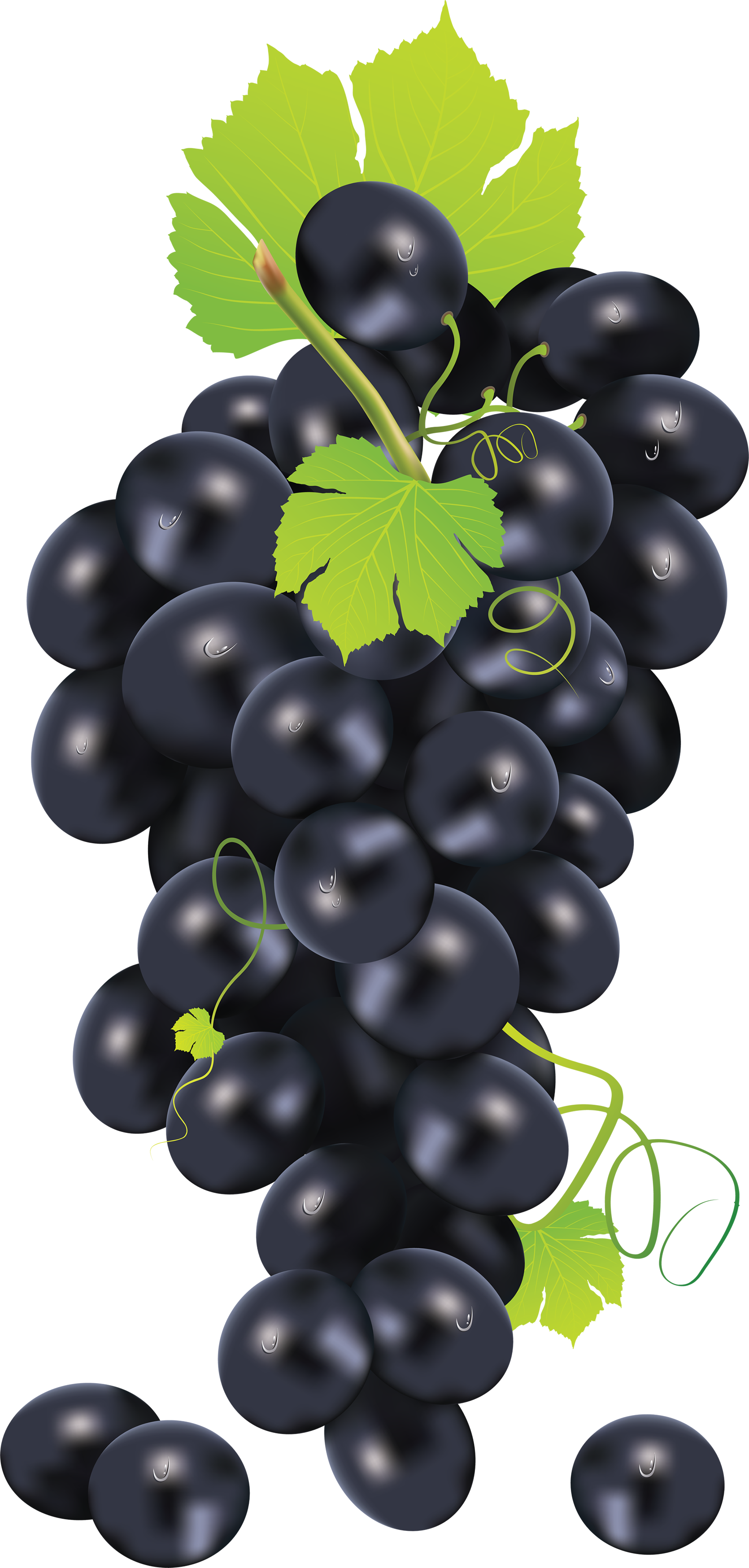 Grape clipart wine grape. Forty six isolated stock