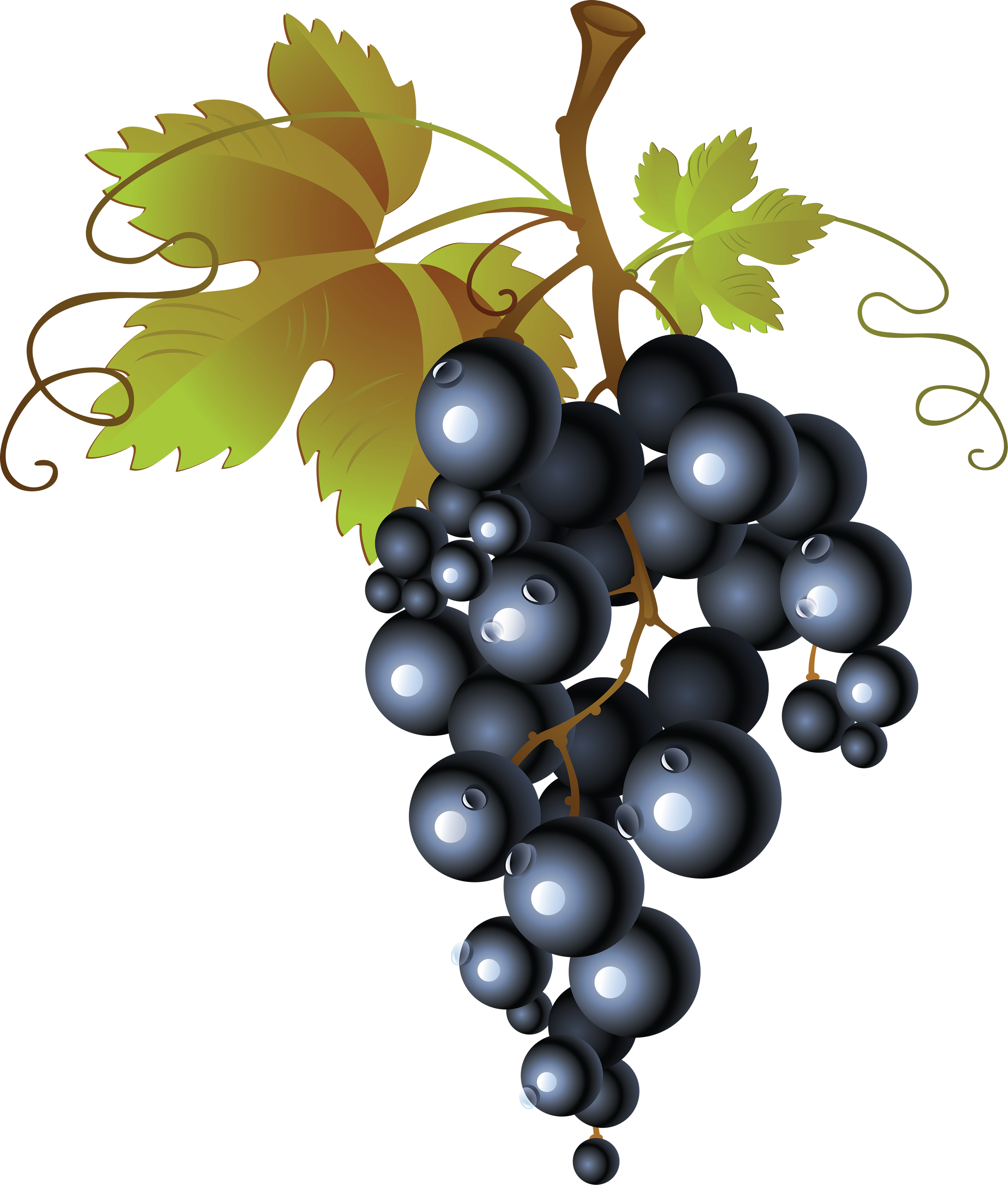 Grapes clipart bread. Grape fifty three isolated