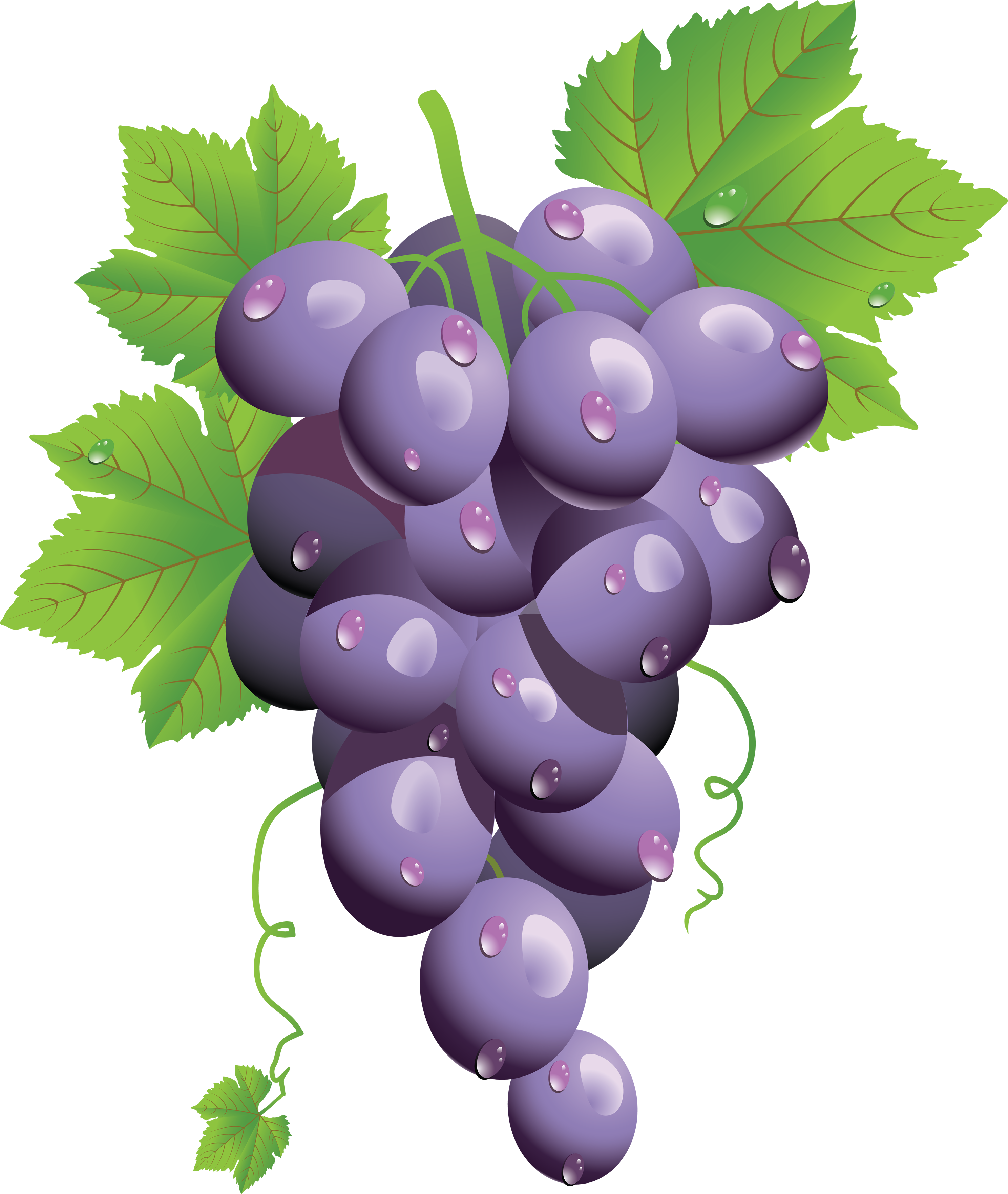 Twenty eight isolated stock. Clipart png grape
