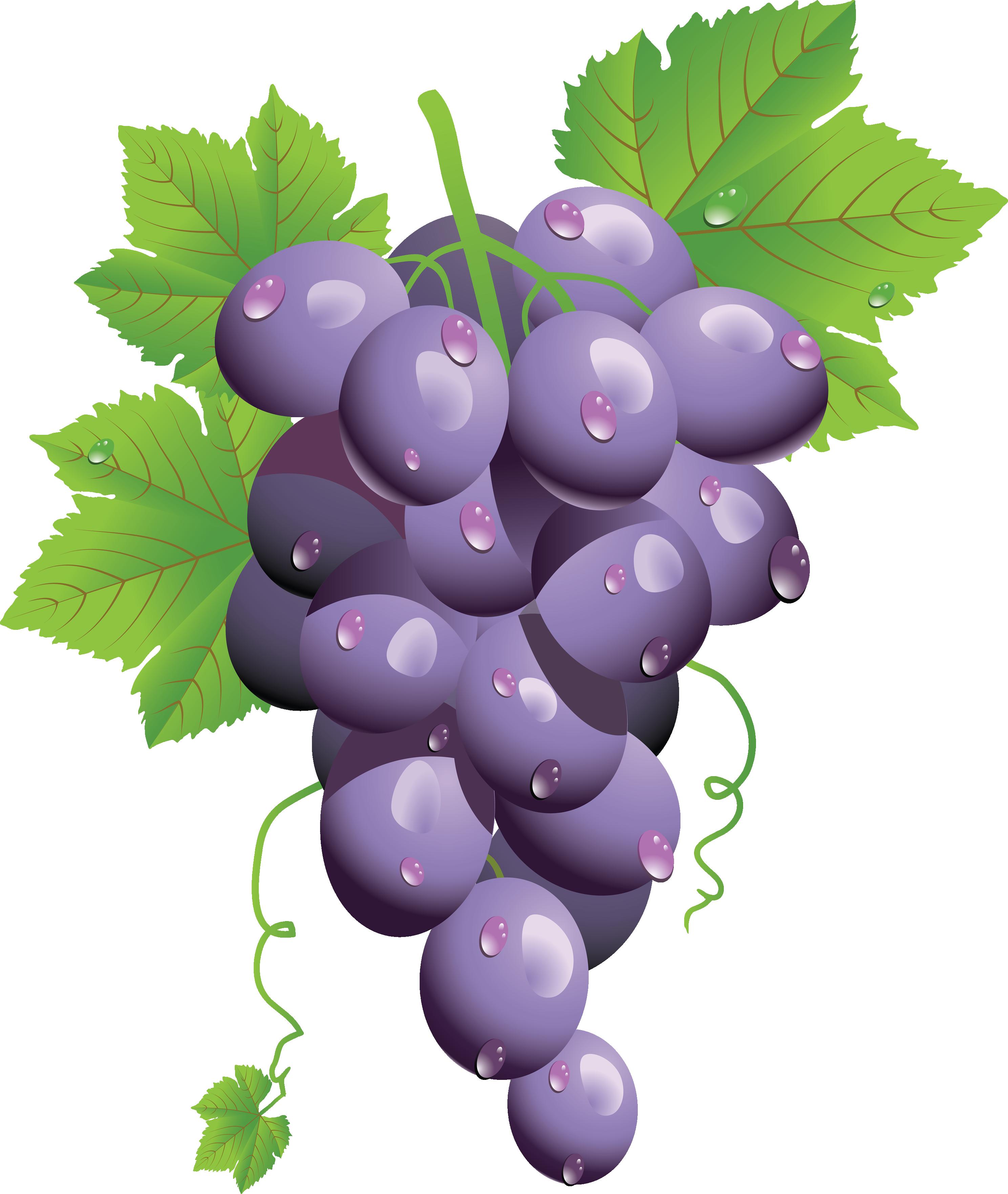 Twenty eight isolated stock. Grape clipart cheese