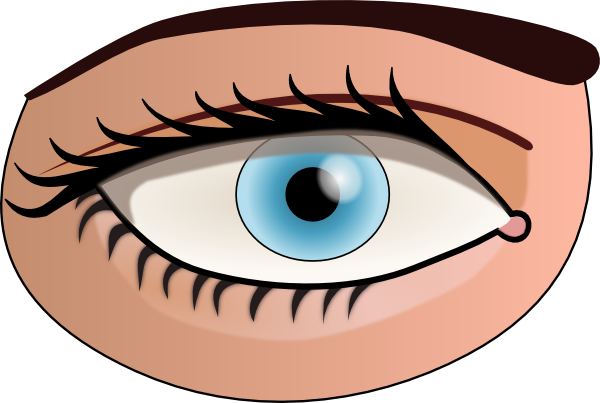Free cliparts download clip. Eyes clipart human eye