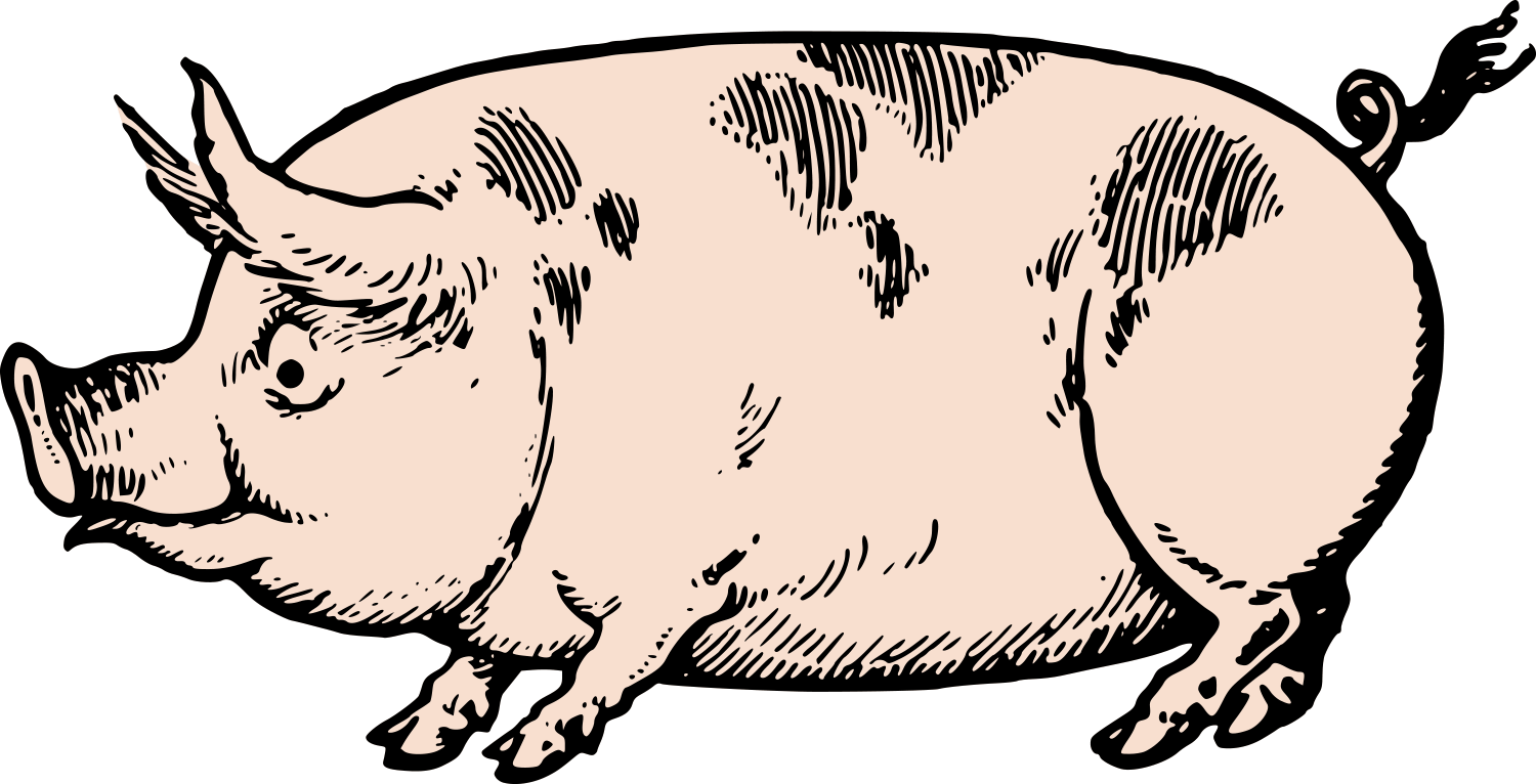 Pig images free download. Pigs clipart swine