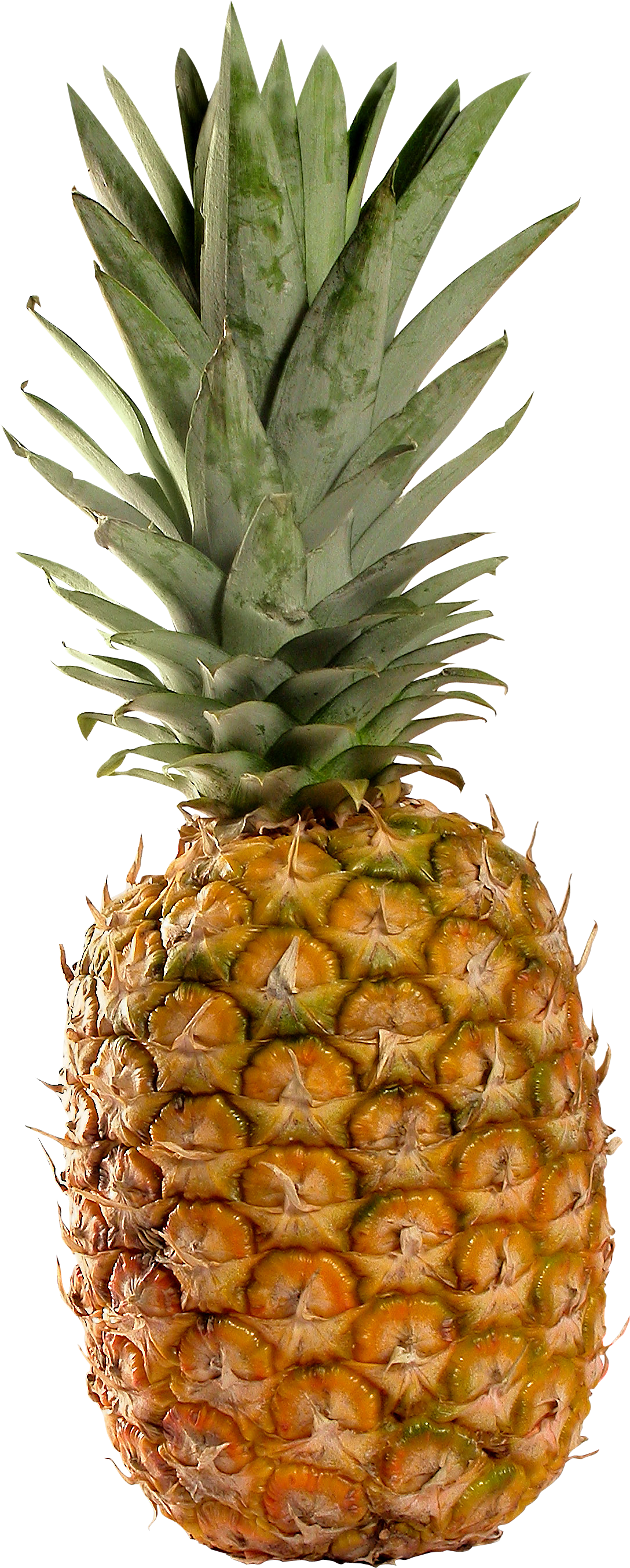 Pineapple clipart tropical. Twenty three isolated stock