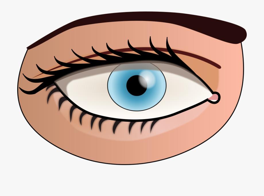 Eyes clipart sense. Eye png parts of