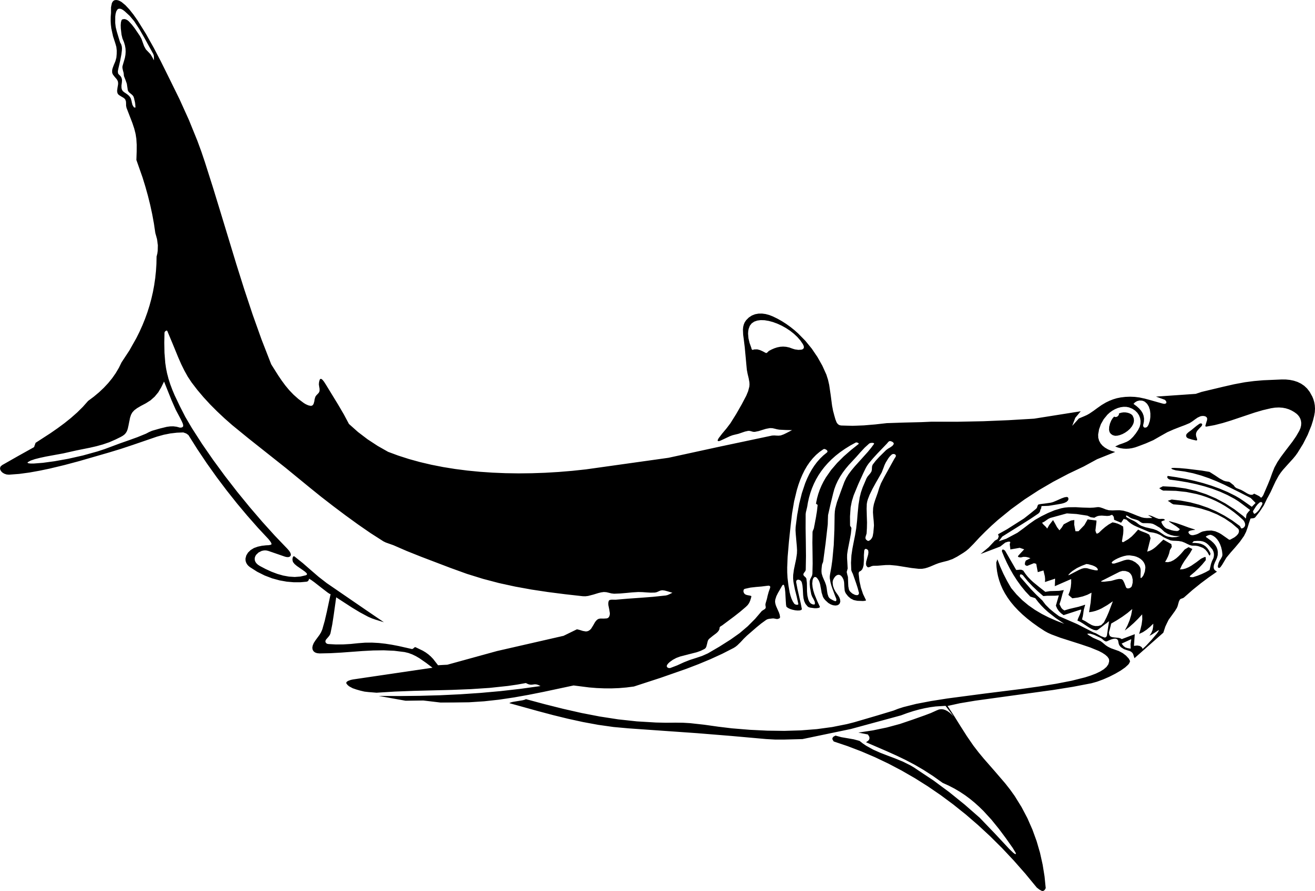 Clipart shark blacktip shark. Great white clip art