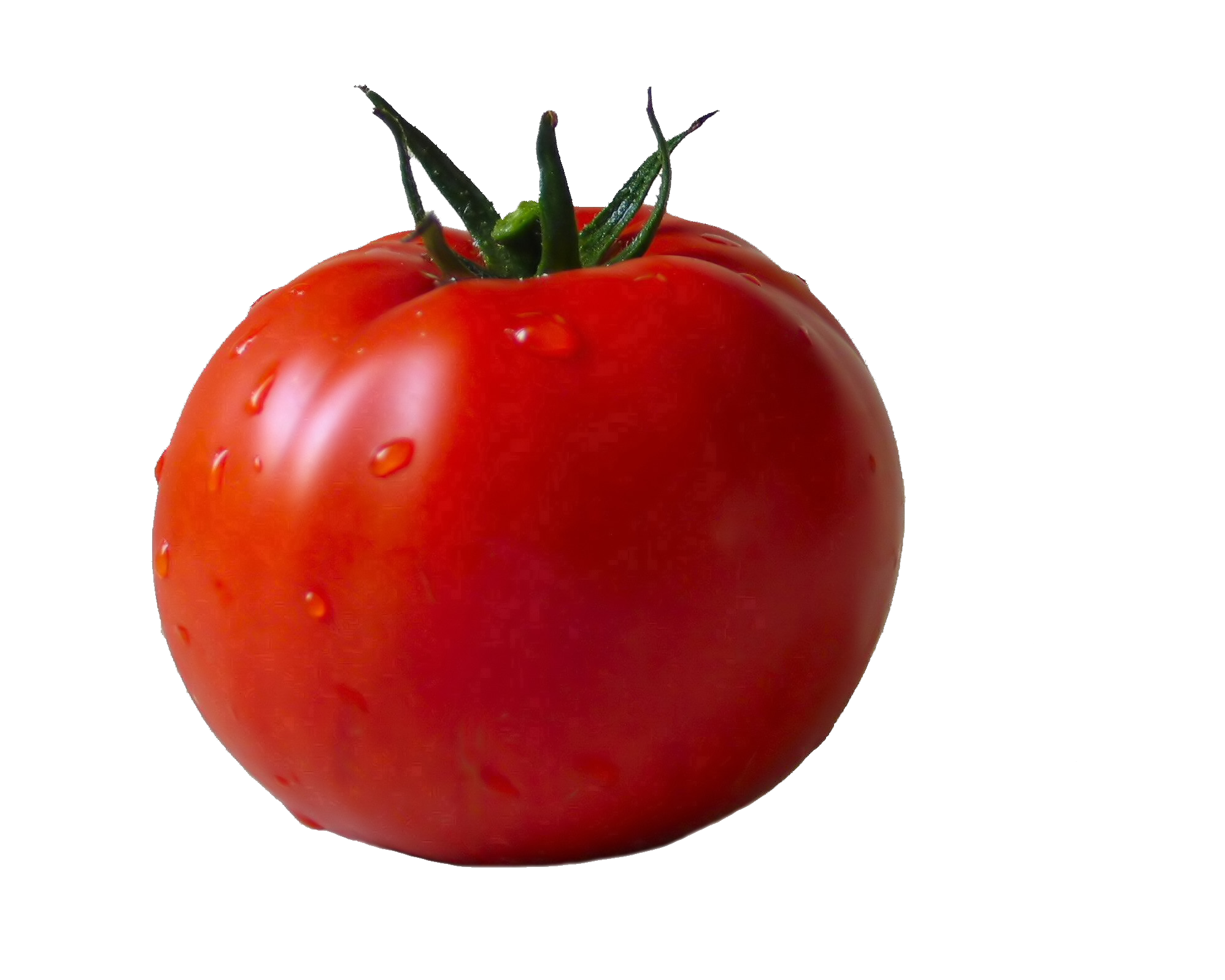 Sixty one isolated stock. Outline clipart tomato
