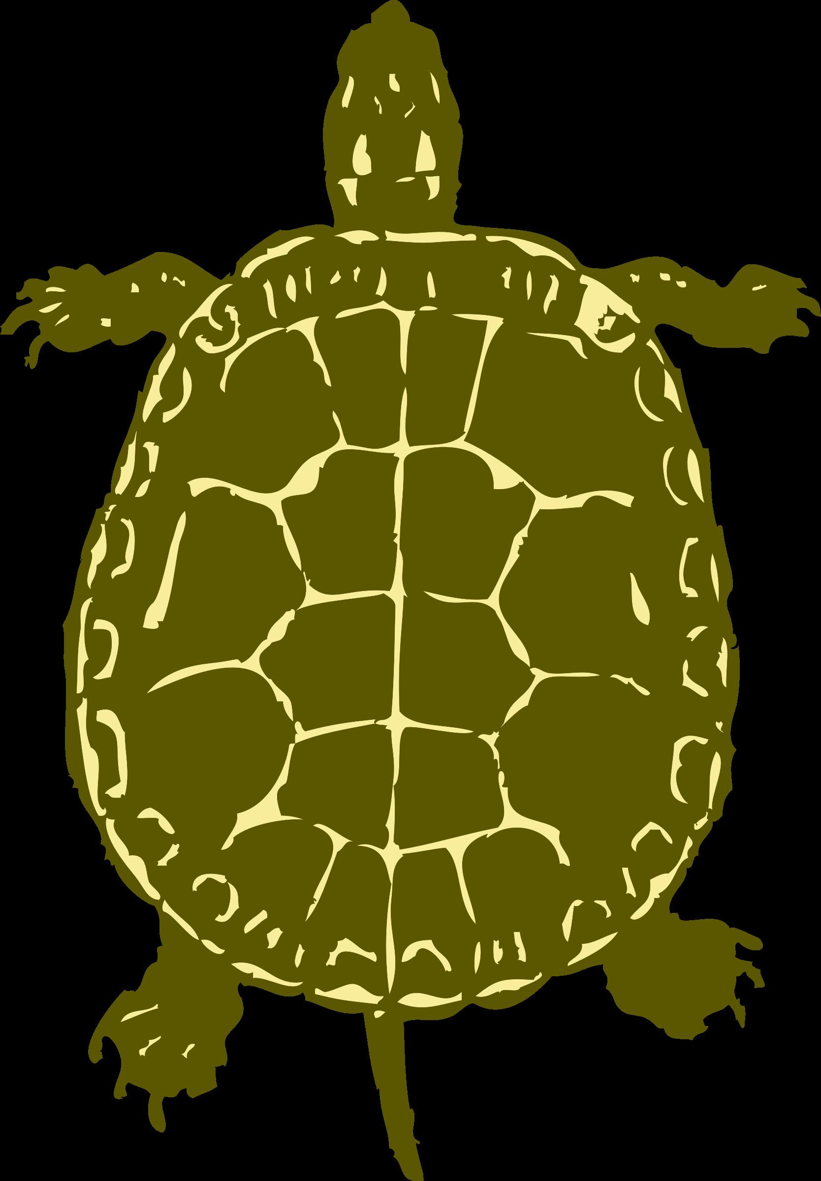 Eye clipart turtle.