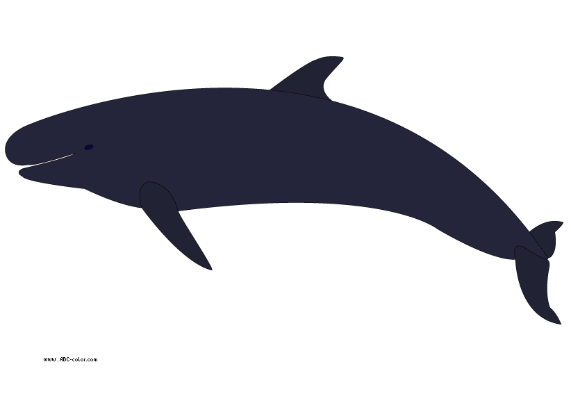 Orca clipart large whale.  collection of no