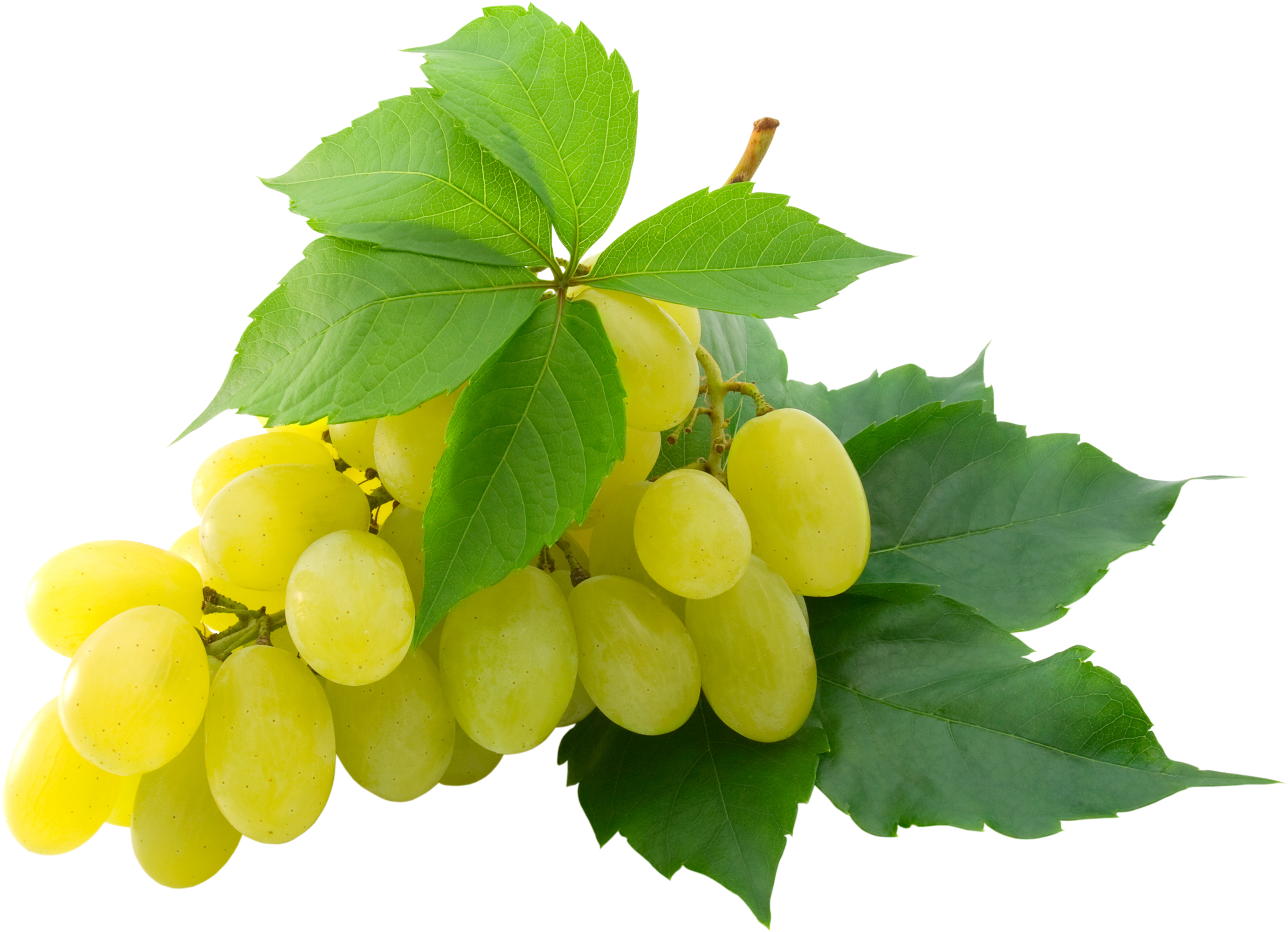 Grape twenty seven isolated. Grapes clipart leaves