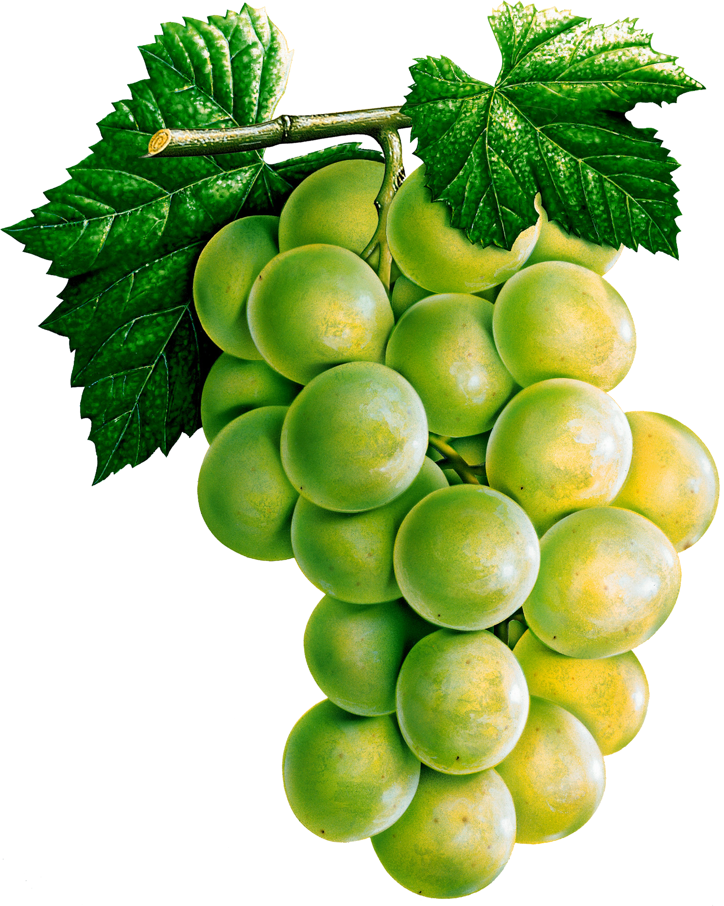 Grape five isolated stock. Grapes clipart health food