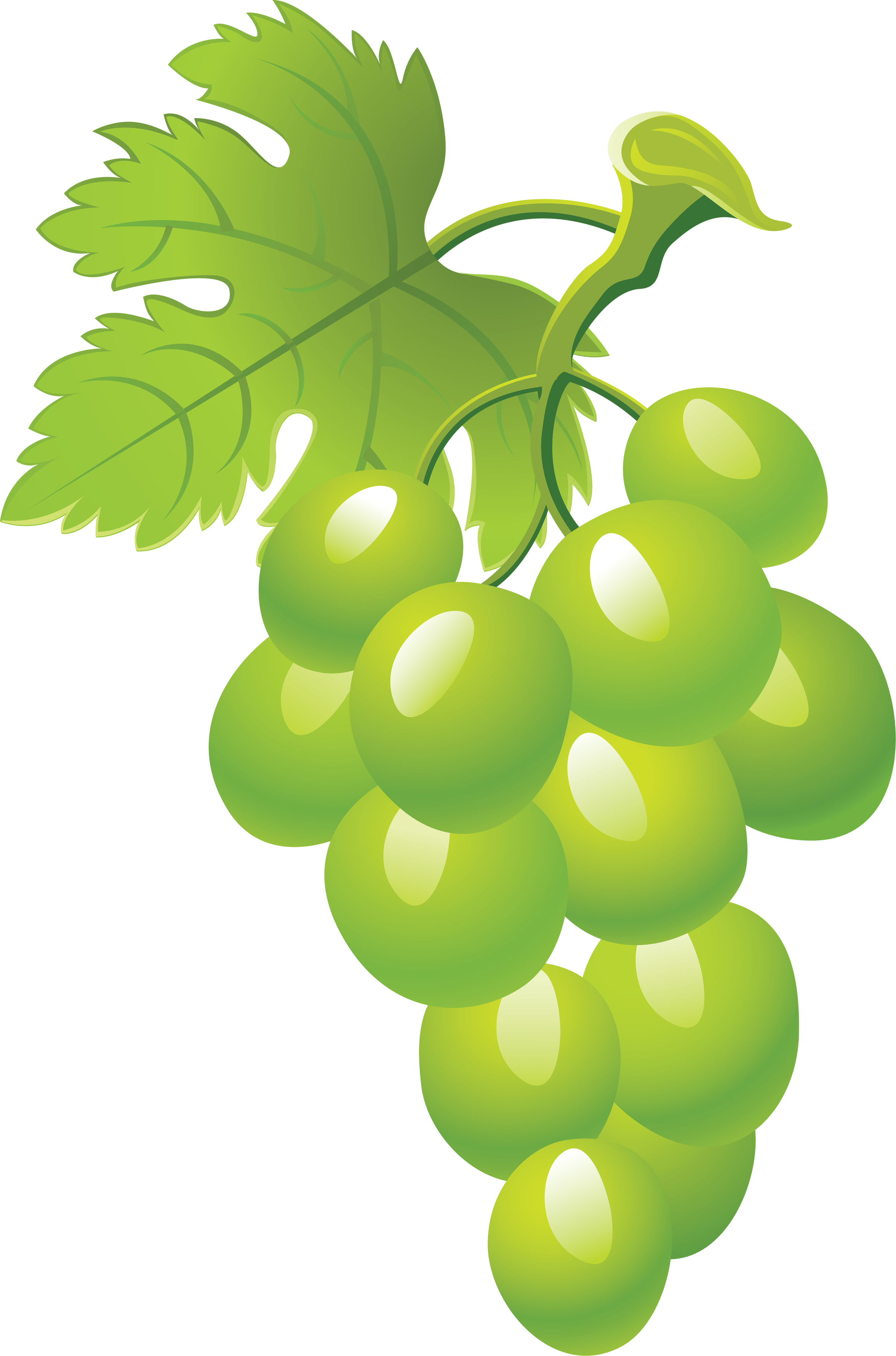 Seventeen isolated stock photo. Clipart png grape