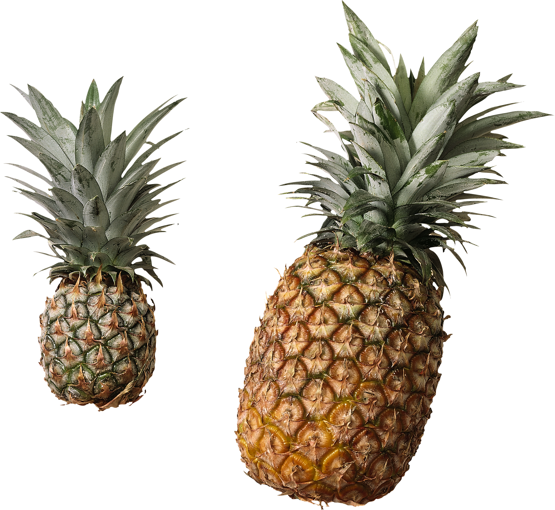 Pineapple clipart transparent. Thirty isolated stock photo