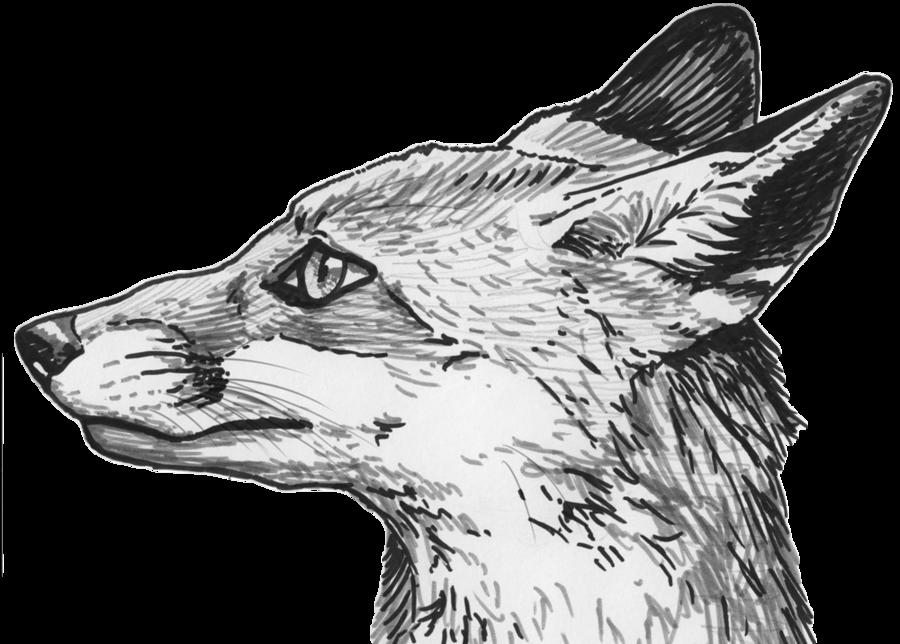 Fox clipart gray fox. Eyes png mart
