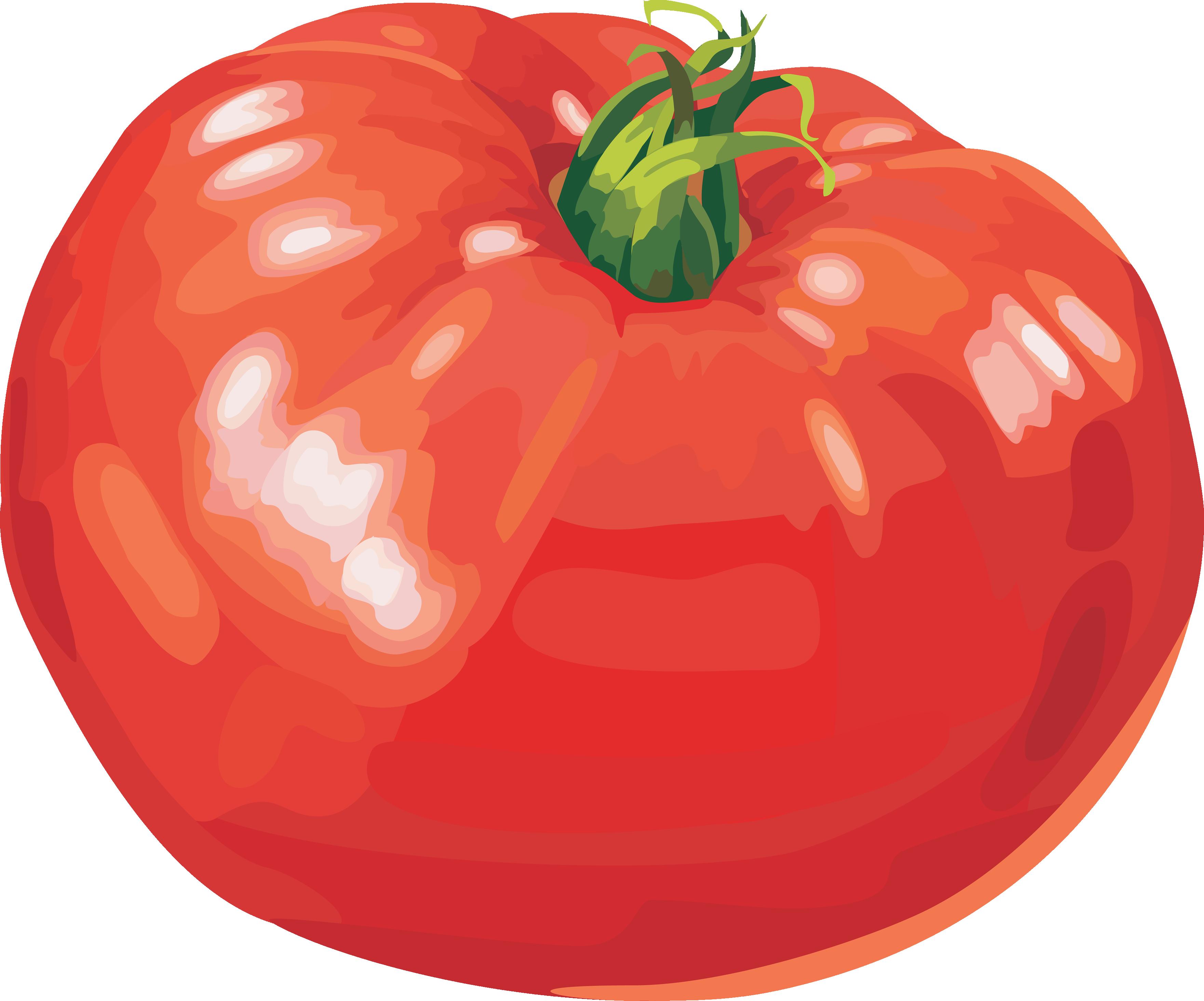 Tomato seventeen isolated stock. Tomatoes clipart fresh