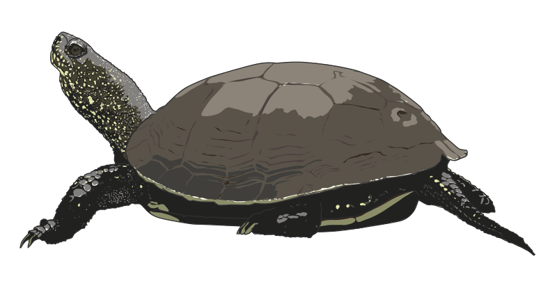 Tired clipart tortoise. Turtle panda free images