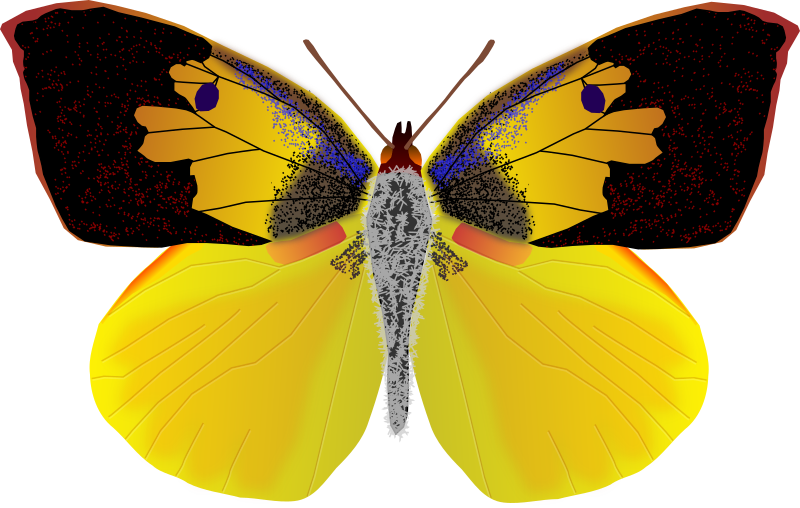Clipart face butterfly. Dogface medium image png