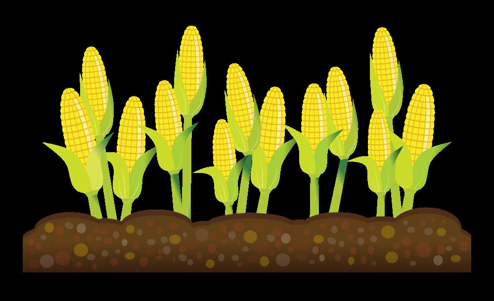 Seed corn free on. Farm clipart grass