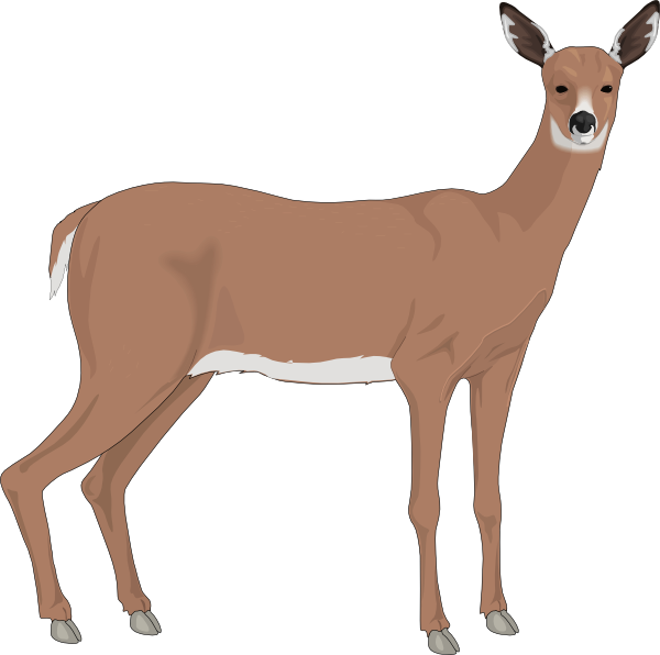 Staring clip art at. Deer clipart roe deer