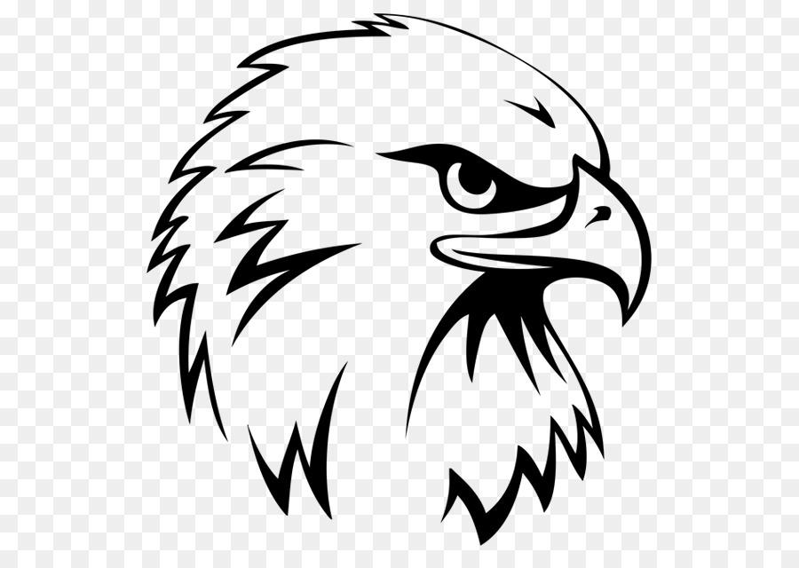 Eagle clipart hawk. Bird line drawing