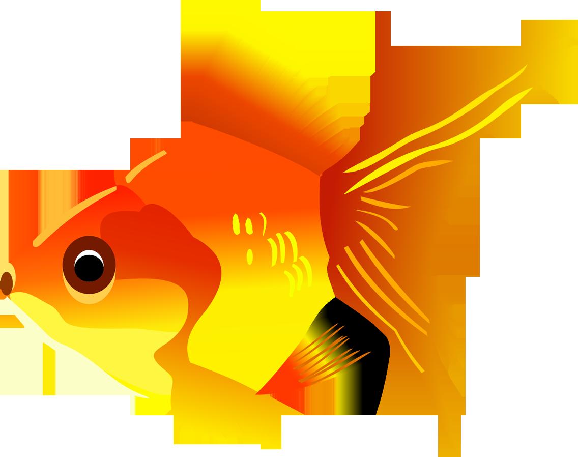 Goldfish clipart 2 fish. Png transparent images free