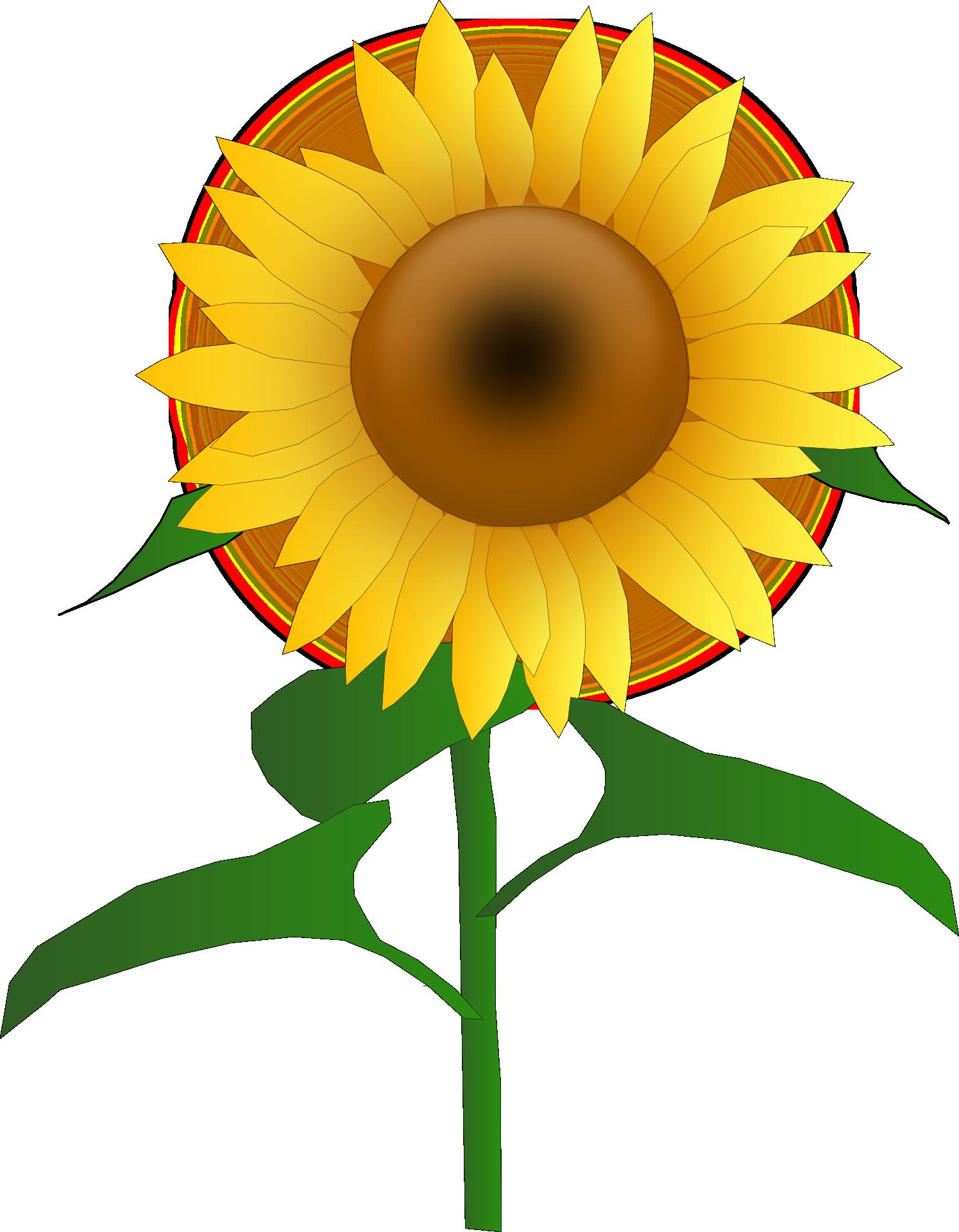 Free photo graphic flower. Garden clipart sunflower