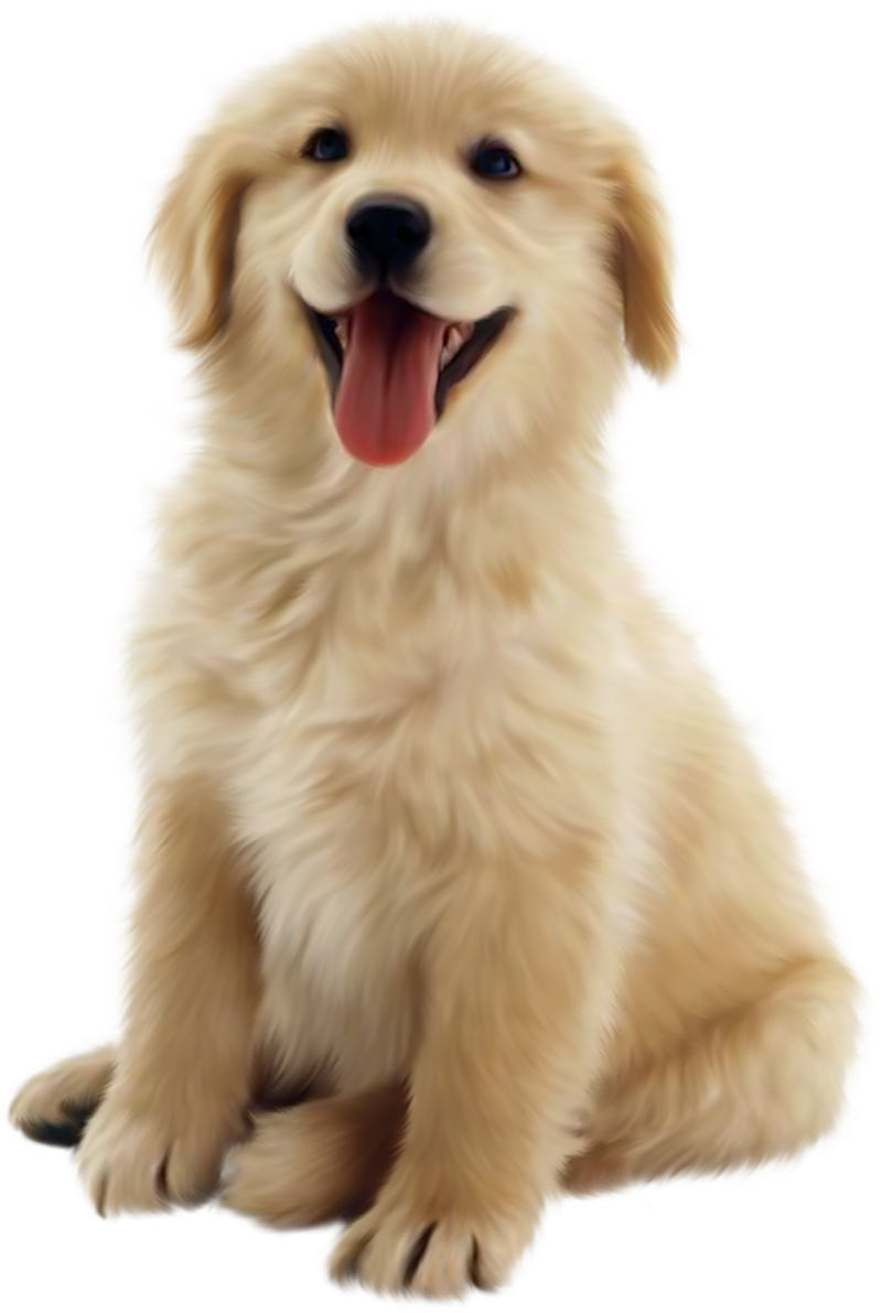 Face Clipart Golden Retriever Face Golden Retriever Transparent